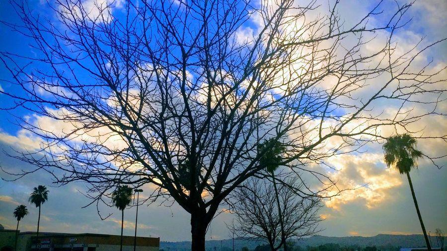 Tree Branch Sky