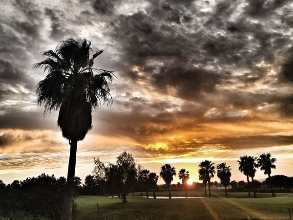 Sunset Algarve Portugal Algarve Dark Clouds Sunset Tree Palm Tree Cloud - Sky Sunset Sky Growth Beauty In Nature Tranquility Nature Outdoors No People