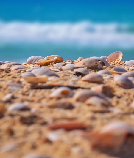 Surface Level View Of Seashells On Shore At Beach