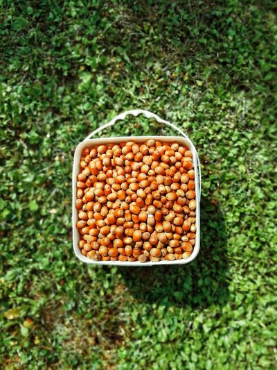 EyeEmNewHere Grass Nut Nuts Nutshells Almonds Almonds Background Almondshell Almonds From The Tree Almonds Fruits Legume Family Directly Above Grass Close-up Green Color Food And Drink Growing Dried Food Nutshell Cashew