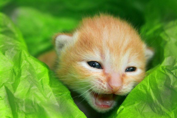 Kitten Kitty Kitty Cat Kitty Roar
