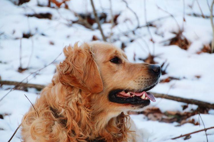 Dog lover Dog
