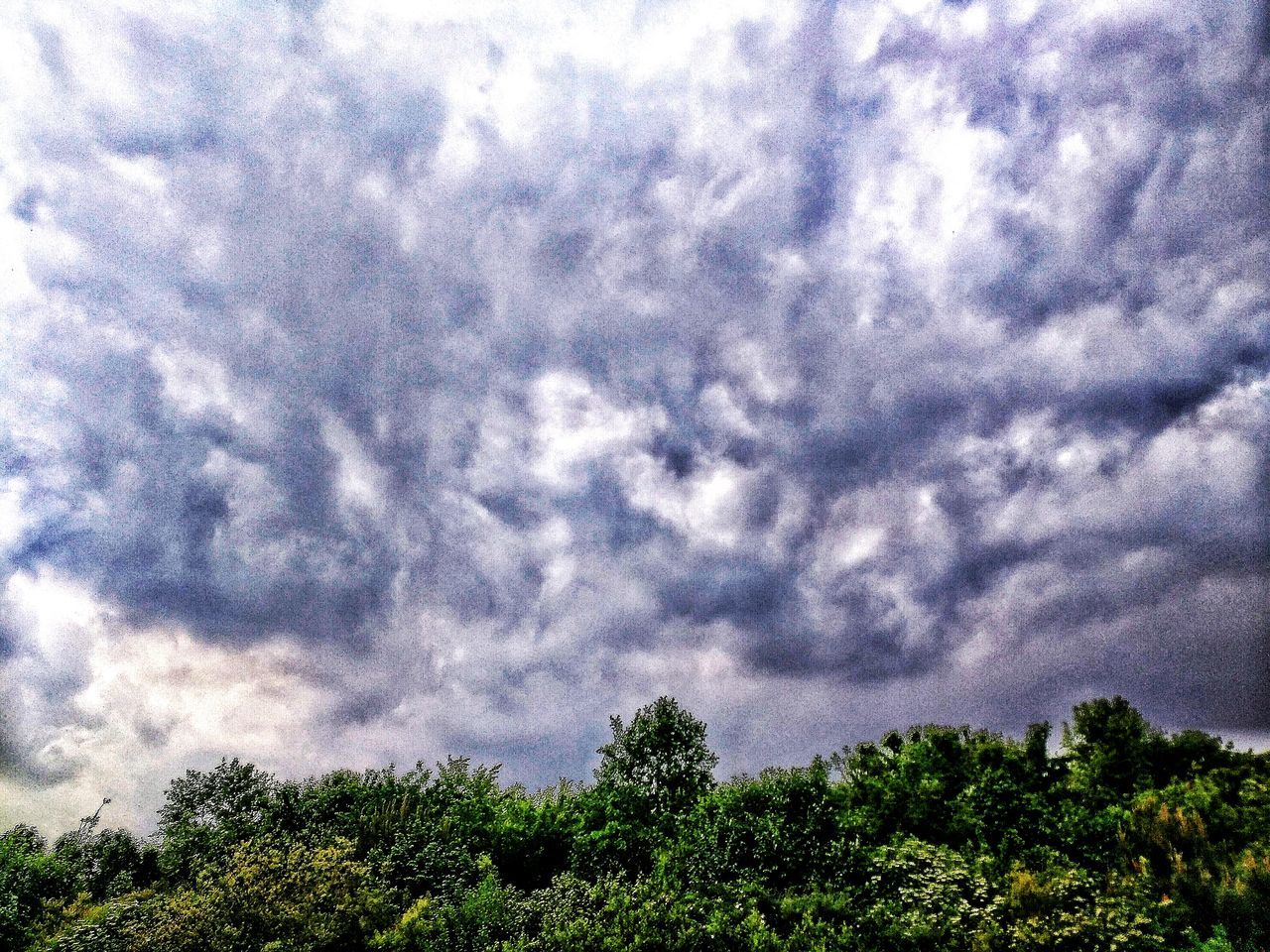 tree, sky, nature, low angle view, cloud - sky, beauty in nature, day, no people, scenics, tranquility, outdoors, tranquil scene, growth, storm cloud