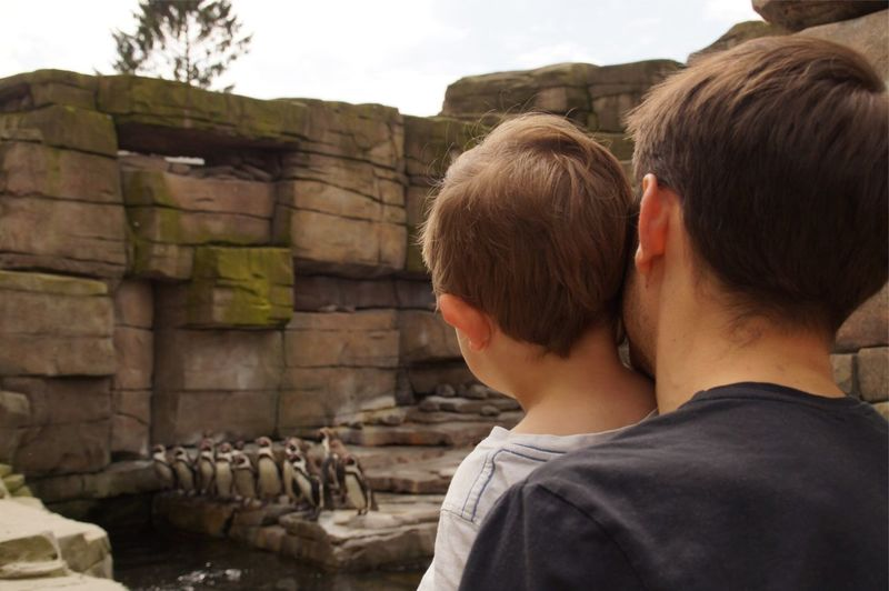 Father And Son Looking At Penguins At Hagenbeck Zoo