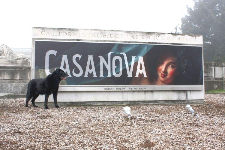 """Casanova: The"