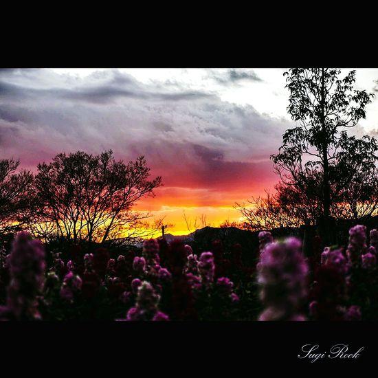 夕焼け 夕焼け空 夕焼け雲 Sunset Flowers クラウド Cloud 三川公園 海老名 This Is Natural Beauty