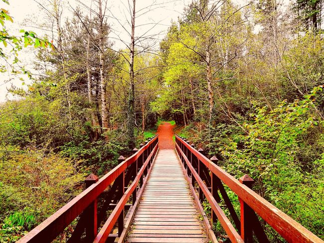 MysticLands Ireland🍀 EyeEmNewHere Outdoors The Way Forward Beauty In Nature Nature Footbridge