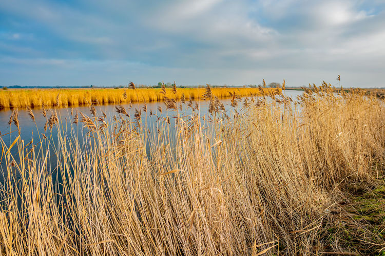 View over the river yare in acle on the norfolk broads