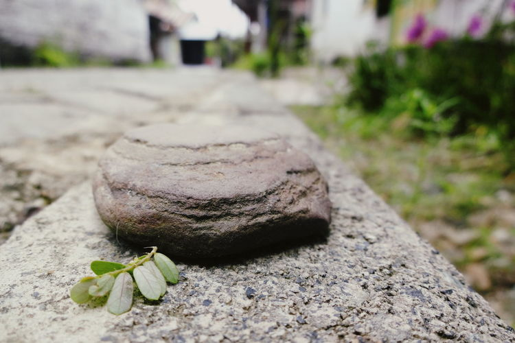 Stone and Leaf then Earth No People Close-up Outdoors Nature Power In Nature Beauty In Nature Fine Art Photography The Week On EyeEm EyeEmNewHere Low Angle View Nature Rear View Backgrounds Full Length Stone Tile The Still Life Photographer - 2018 EyeEm Awards