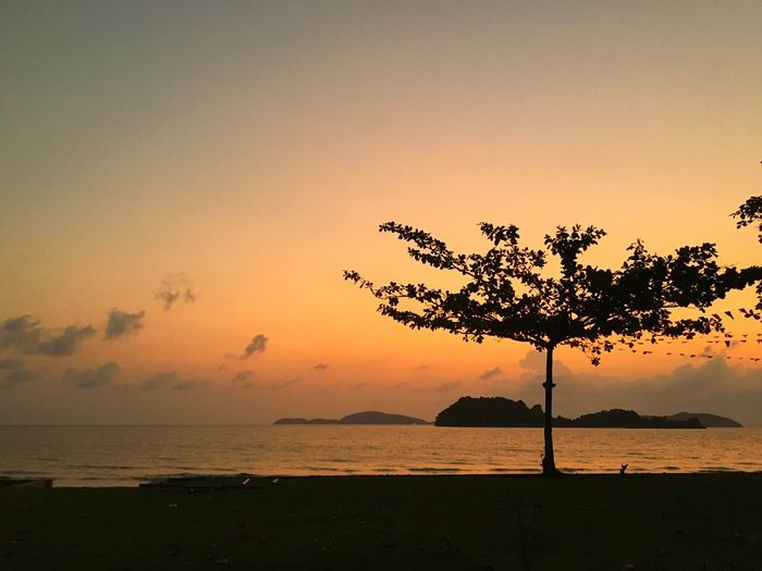 Silhouette tree on beach against sky during sunset