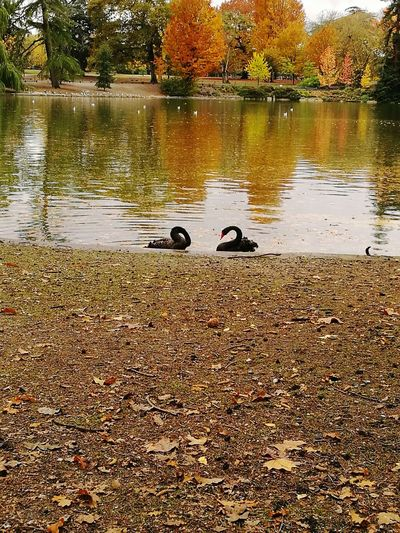 Parc Lac Canard NatureWater Animal Themes Reflection Animals In The Wild Tree Outdoors No People Day Animal Wildlife Nature Bird Beauty In
