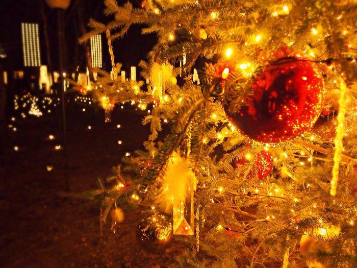 Christmas Illumination Christmas Tree Taking Photos
