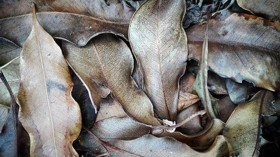 Brown Autumn Autumnleafs Deadleaves Leaveonlyleaves Loldrops_01 Macro Nature 9vaga_silent9 Wmm_brown