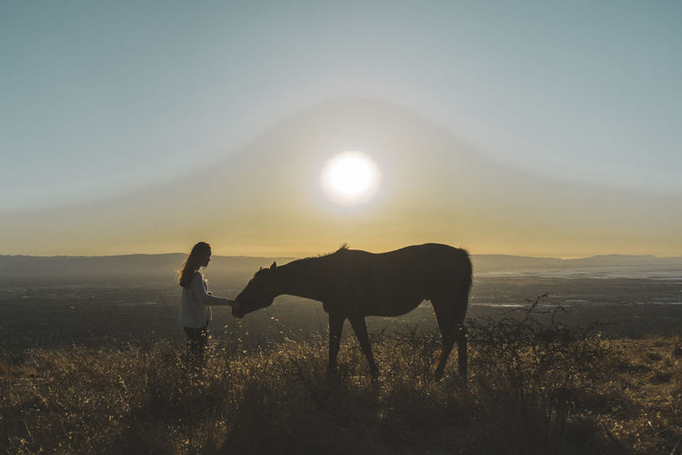 Side View Of Woman Pampering Horse On Field At Sunset