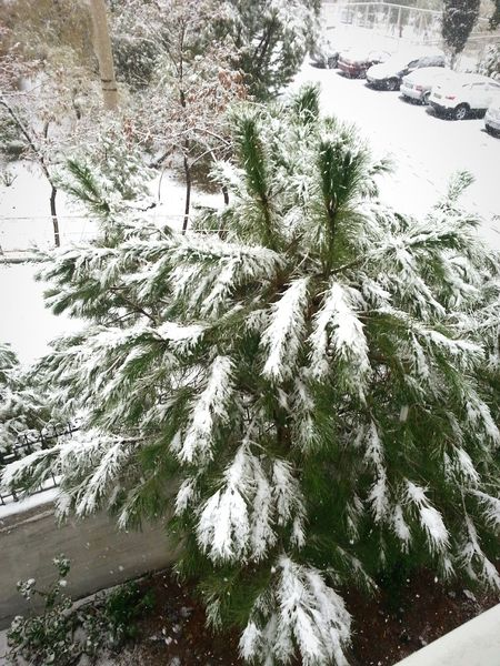 Nature Tree Growth Beauty In Nature Close-up No People Day Outdoors Branch Plant Backgrounds Snow Water ⛄❄