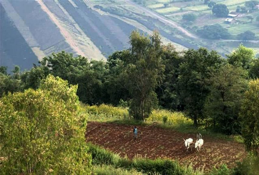 Growth Sunlight Nature Green Color Grass Tree Plant Plantation Rural Scene Field Agriculture No People Beauty In Nature Outdoors Day Scenics Landscape Lush - Description Panchgani, Maharashtra,india Terraced Field Tranquility Farming Ploughing