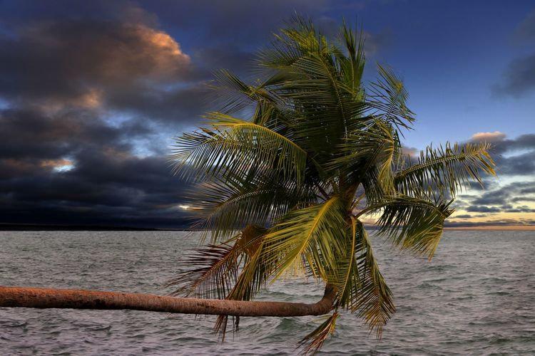 A palm tree leans into the bay as the evening draws in on this tropical island Water Palm Tree Tropical Climate Sea Tree Sky Tranquility Cloud - Sky Nature Beach Land Scenics - Nature Tranquil Scene Palm Leaf Horizon Over Water Beauty In Nature Horizon No People Coconut Palm Tree Outdoors Tropical Tree Travel Photography Travel Destination Tourist Destination Evening Light
