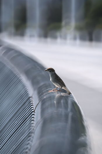 Close-up of bird perching in pipe