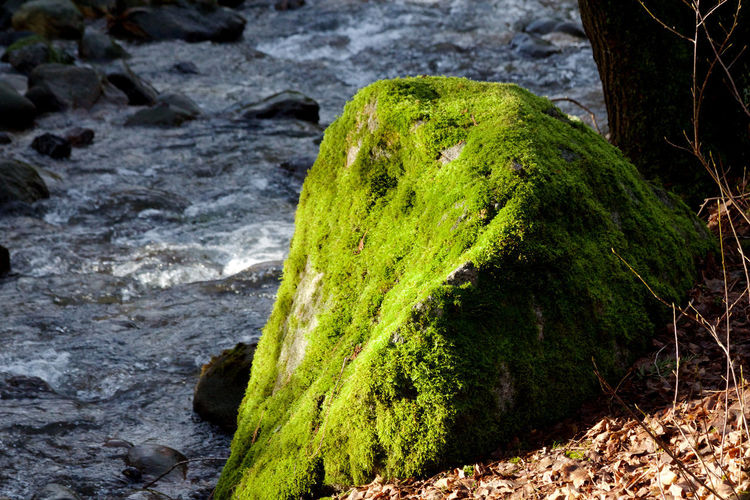Green Color Moss Rock Solid Water No People Nature Rock - Object Beauty In Nature Growth Tranquility Flowing Water Outdoors