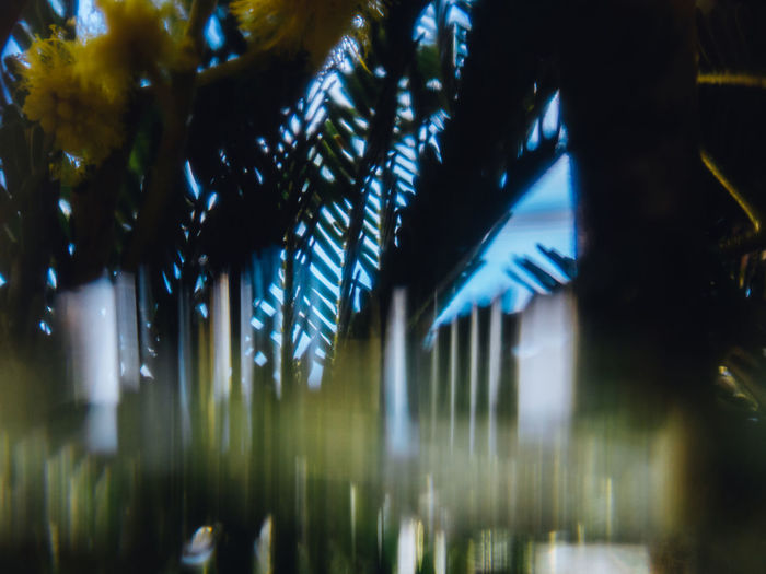 Plant Tree No People Illuminated Nature Night Growth Outdoors Selective Focus Palm Tree Green Color Blue Tranquility Beauty In Nature Blurred Motion Architecture Tropical Climate Sky Light - Natural Phenomenon