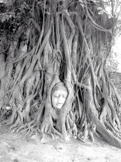 Thailand Ayutthaya Watmahathat Worldheritage タイ アユタヤ遺跡 世界遺産 ワットマハタート