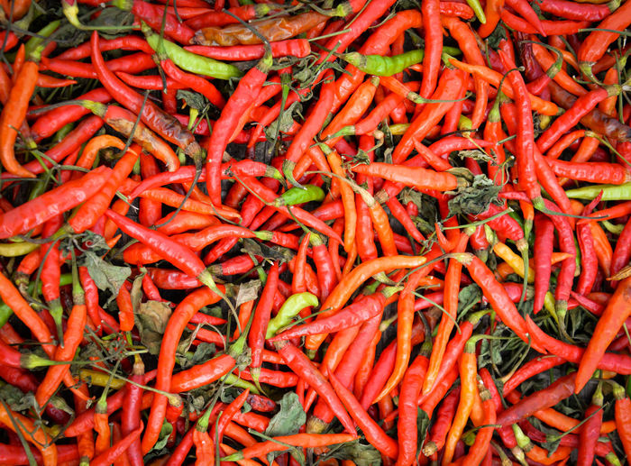 red chili pepper on threshing basket to sun dry background Agriculture Asian  Background Bird Birds Capsicum Cayenne Chile Chili  Chilli Chillies Chilly Closeup Color Colorful Cooking Dry Eye Fiery Food Fresh Freshness Green Group Health Healthy Hot Ingredient Isolated Market Mexican Natural Nature Organic Padi Paprika Pepper Pile Plant Powder Red Seasoning Small Spice Spicy Thai Vegetable Vegetarian White Whole