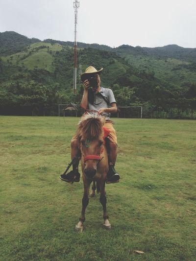 Horse Cowboy Cow man