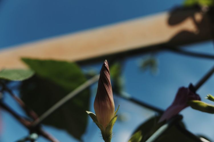 EyeEm Selects Flower Water Close-up Sky Plant Architecture