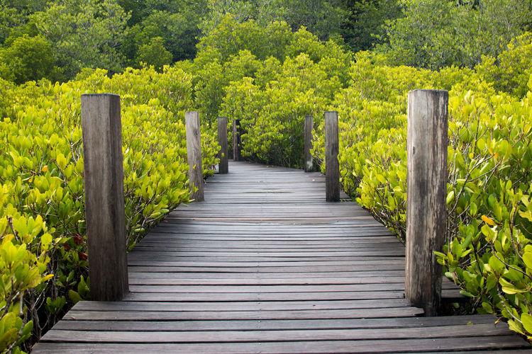Boardwalk amidst plants in forest