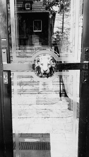 Lion Eyeemphotography Eye4photography  EyeEm Best Shots Popular Photos Beliebte Fotos EyeEm Gallery Taking Photos Showcase July Showcase: July Door The City Light Minimalist Architecture