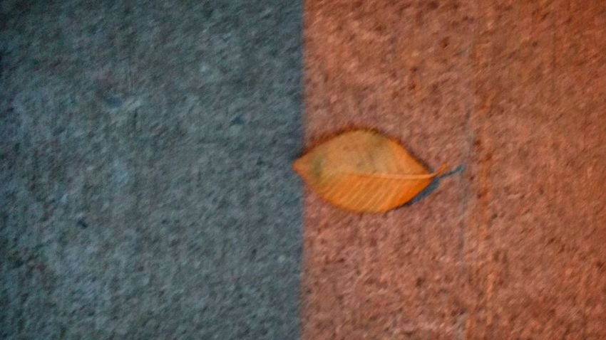 -Blurred fall- No People Textured  Close-up Fall Nature