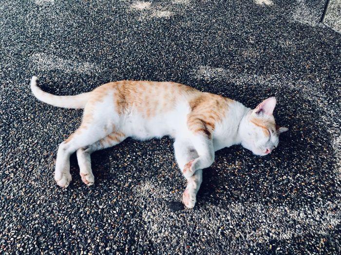 One Animal Animal Animal Themes Mammal Domestic Pets Cat Lying Down Sleeping Relaxation Resting