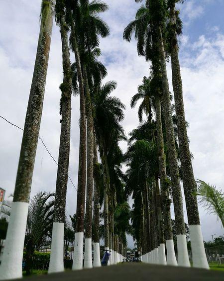 El parque... Costa Rica Tardes HuaweiP9 Soledad Caminar
