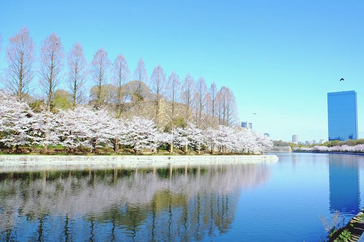 Naturalmirror Sakura Osaka,Japan GlassyWaters Shadow Verynice Rightplacerighttime
