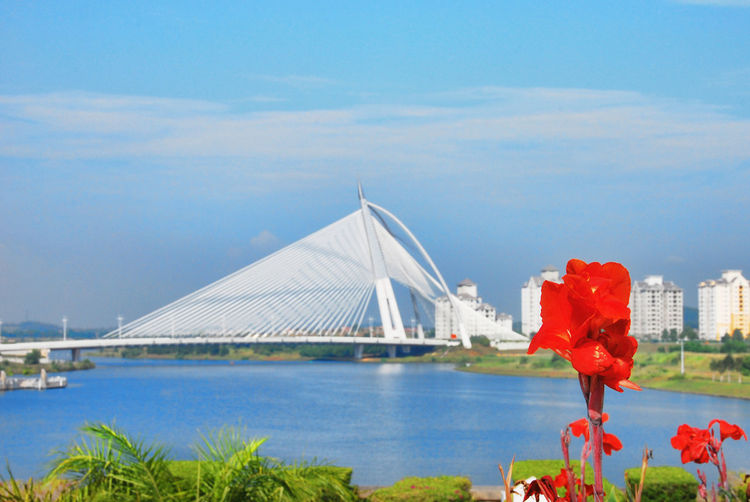 Wawasan Bridge, Putrajaya, Malaysia Putrajaya, Malaysia Red Architecture Bridge Bridge - Man Made Structure Built Structure Cloud - Sky Connection Day Flower Focus On Foreground Nature Outdoors Putrajaya Sky Travel Destinations Wawasan Bridge