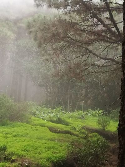 Las Raíces Tenerife Tree Nature Weather Green Color Beauty In Nature Tranquility No People Tranquil Scene Forest