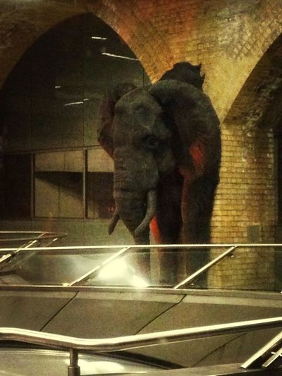 Elephant in waterloo station Daydreaming Hello World Taking Photos Checking In