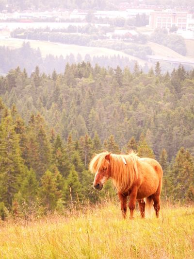 Horse grazing in grass field
