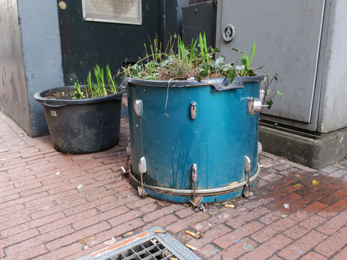 blue drum with plants Drum Street View. Tulips Brick Sidewalk Day Electricity Cupboard Growth No People Outdoors Plant Potted Plant