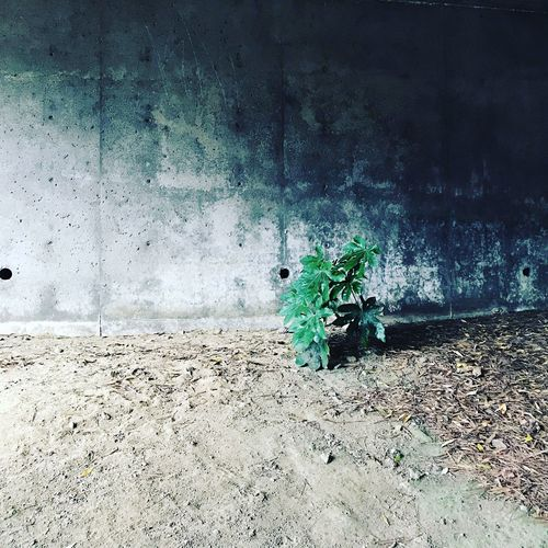 Abandoned horse cart on wall