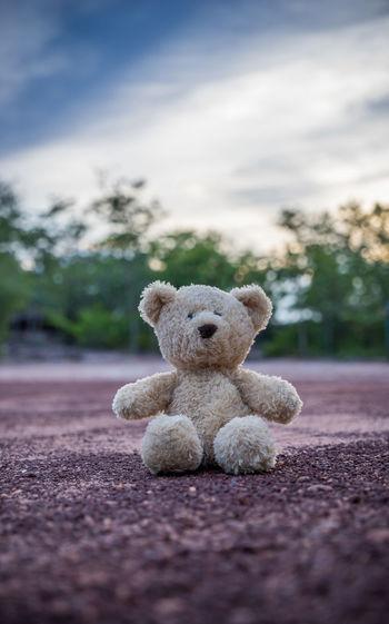 Teddy Bear On Field