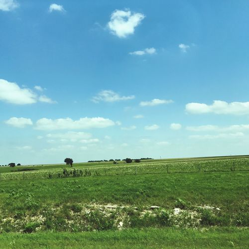Field Sky Grass