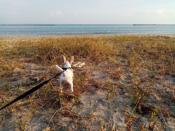 View of dog on sea shore