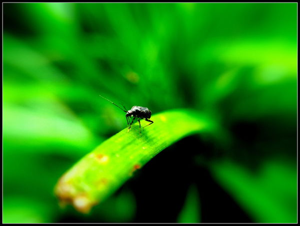Insect Animals In The Wild Green Color Animal Themes One Animal Nature Animal Wildlife No People Close-up Leaf Day Outdoors Plant Full Length Freshness Macro Likeforlikers EyeEm Team Likes4likes Close Up Beauty In Nature