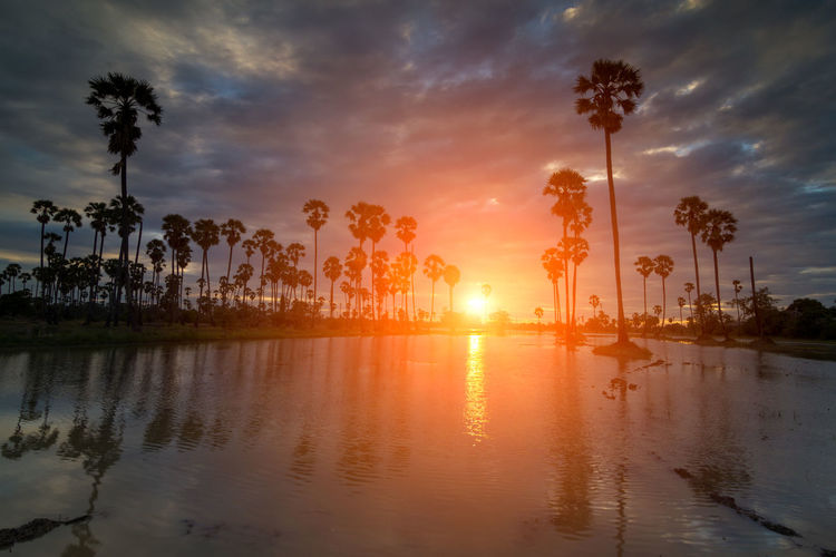 Sugar palm sunset in Thailand Sky Palm Tree Tropical Climate Sunset Tree Water Reflection Cloud - Sky Plant Beauty In Nature Nature Sun Orange Color Scenics - Nature Sunlight Silhouette Tranquility Tranquil Scene No People Outdoors Lens Flare Swimming Pool Coconut Palm Tree