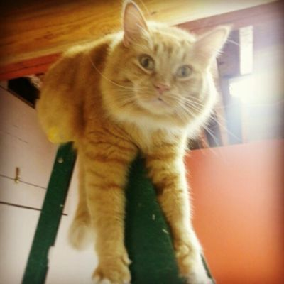 '' What you lookin at woman??? You ain't ever seen a cat sleep on top of a ladder before? '' :-)