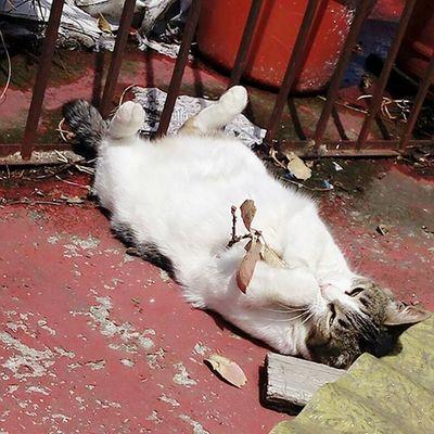 Relaxing Cheese! Blue Sky Kitty Kat Love ♥ Teextraño Amor ♥ Kittykitty Cat Photography C A T Taking Photos Cat♡ Friooo❄⛄ Rosa ♡ Cat Kitty