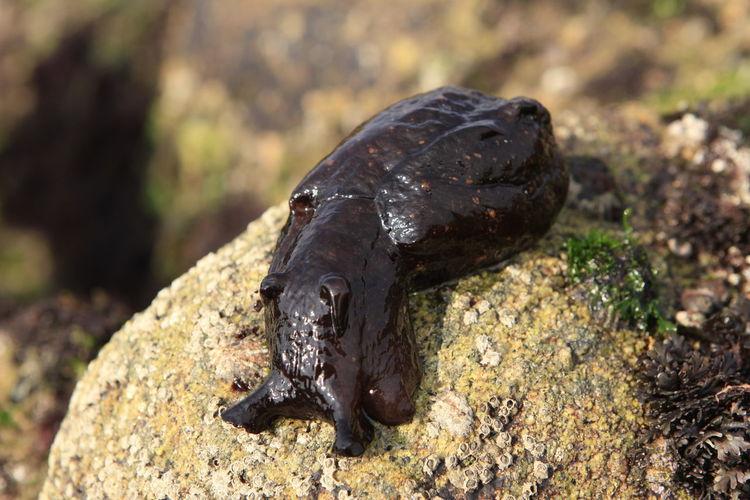 Close-up of slug on rock