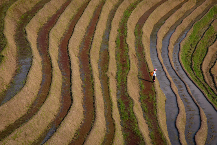 High angle view of man in farm