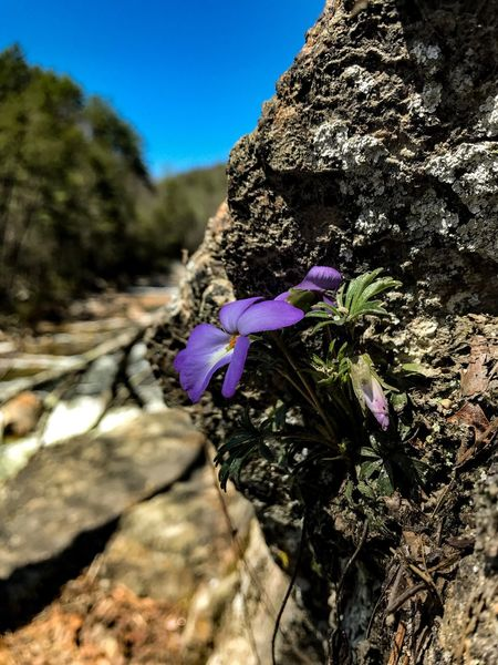 Flower Nature Beauty In Nature Growth Fragility Petal Day No People Purple Plant Outdoors Flower Head Sunlight Blue Close-up Tree Freshness Blooming Clear Sky